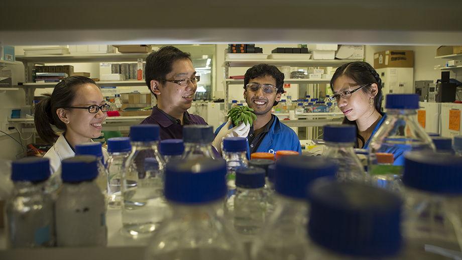 Dr Su Yin Phua, Dr Kai Xun Chan, Diep Ganguly and Estee Tee. Image: Stuart Hay, ANU.
