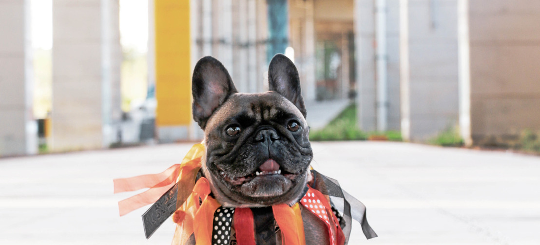 """Pup-Lovers Rejoice: A Dog Costume Party Comes to The Bentway This """"Howl'oween!"""""""