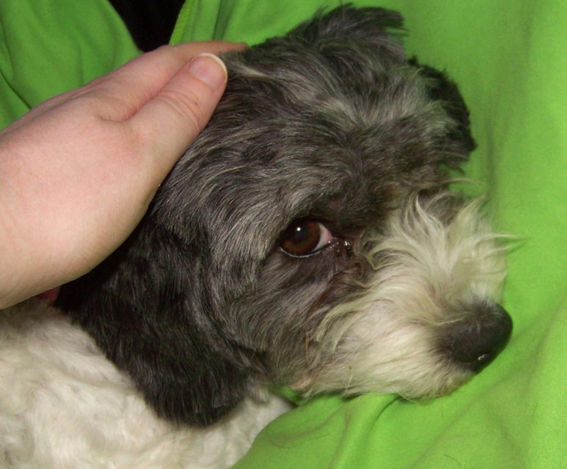 Anderhalf jaar na ontruiming van 402 verwaarloosde honden in kwekerij: de schande van Kasterlee krijgt een staartje voor de correctionele rechtbank