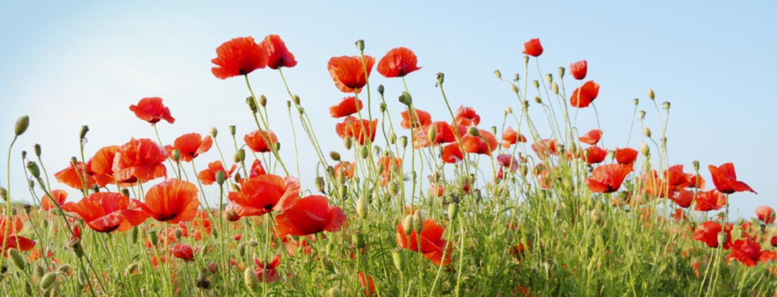 100 jaar Groote Oorlog: nationale herdenking in Nieuwpoort en Ieper op dinsdag 28 oktober – rechtstreeks op Canvas