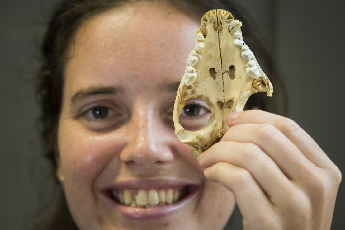 ANU PhD scholar Shimona Kealy with the skull of a Tasmanian Devil. Image credit: Stuart Hay, ANU