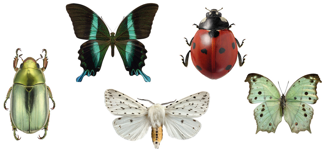 Breng de natuur in huis: insecten als 'macrofotografische' kunstwerkjes