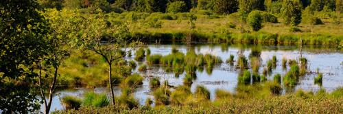 De natuur is van vitaal belang voor de klimaatcrisis, benadrukt WWF