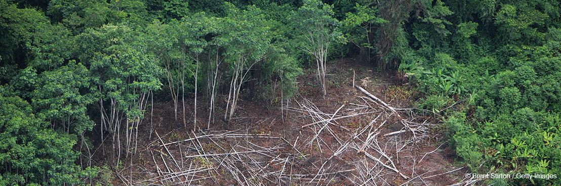 Tijdens de COVID-19-pandemie nam ontbossing met 150% toe