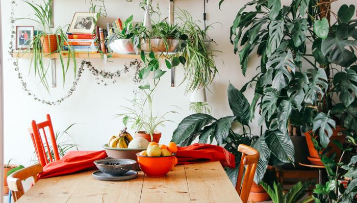 """¿Por qué el ficus es la favorita de los """"plant lovers"""" en Pinterest?"""