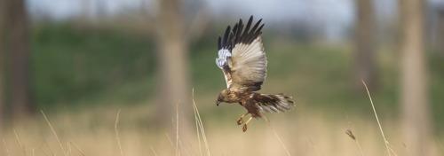 Vlaams minister van Natuur Zuhal Demir wil samen met landbouwers bedreigde broedvogelsoorten beter beschermen