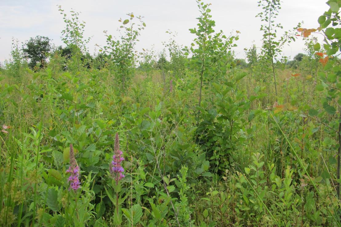 Aankoop van domein 'de Ghellinck' in Zwijnaarde: 42 hectare extra Parkbos
