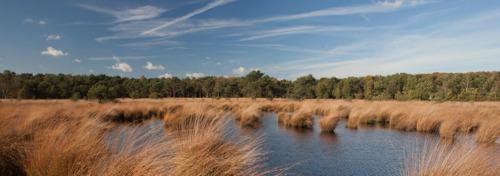 Projectoproep subsidies: 5,8 miljoen euro om de natuur in Vlaanderen te versterken