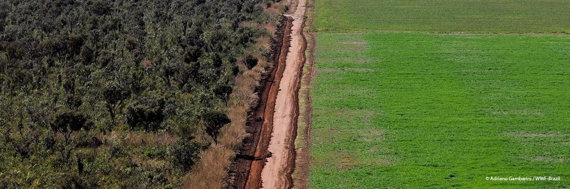 De milieubeweging roept de privé-sector op om een einde te maken aan de vernietiging van de Braziliaanse Cerrado
