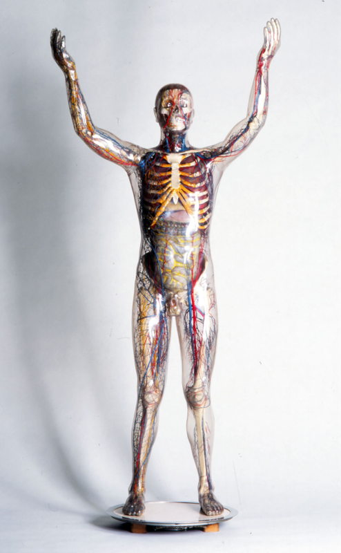 Franz Tschackert, De Glazen man, 1930 © Deutsches Hygiene Museum, Dresden, inv. Volker Kreidler 1962.