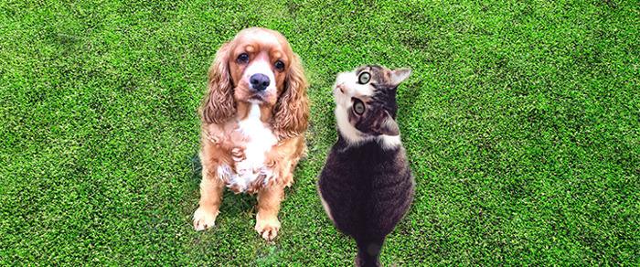 AXA Belgium en SantéVet publiceren de grote honden- en kattenbarometer