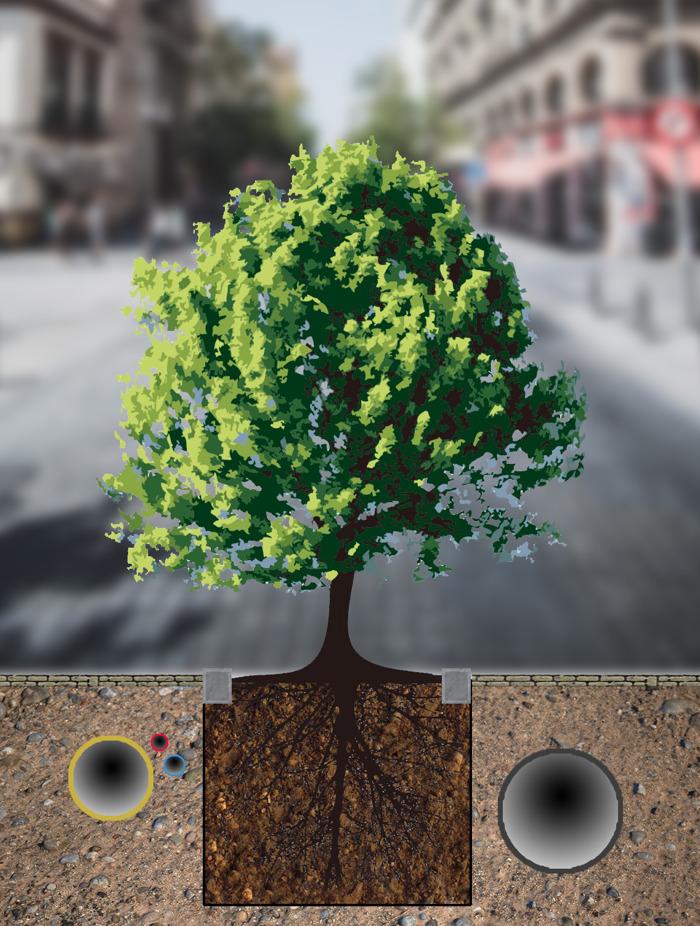 Partout où nous le pourrons, nous planterons des arbres