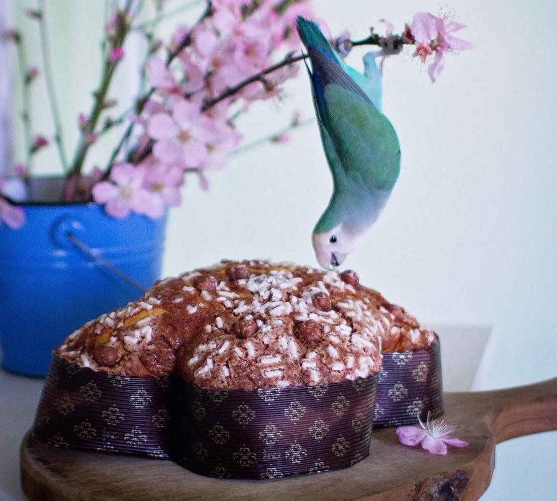 Le colombe artigianali del maestro Simone De Feo