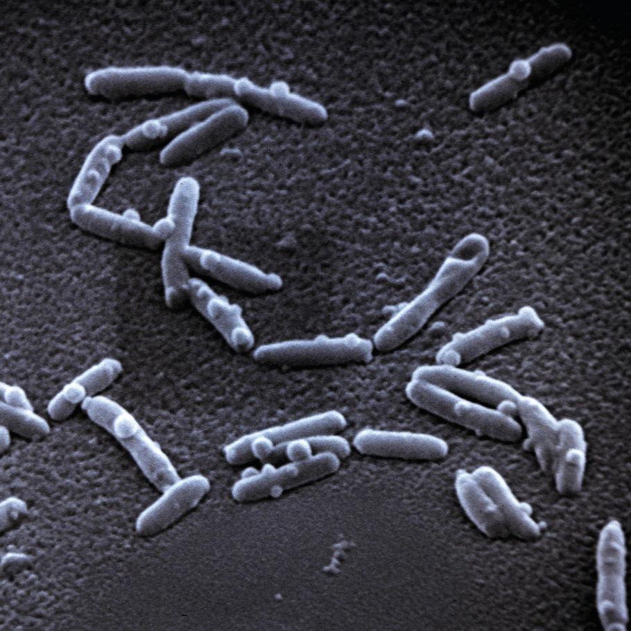 la bactérie de la légionellose