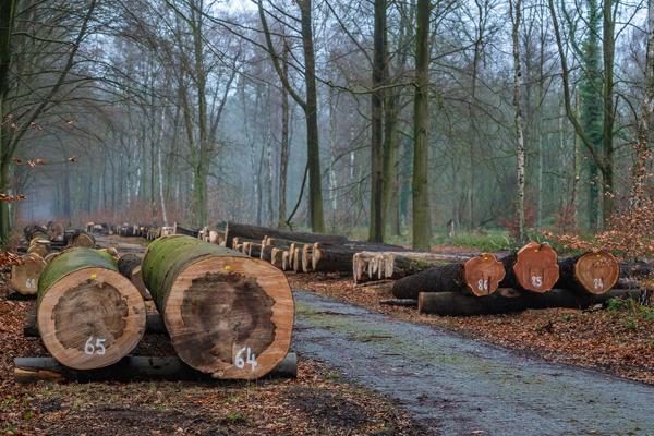 Preview: Trouwe klanten voor kwaliteitsvolle stammen op tweede Vlaams Houtpark