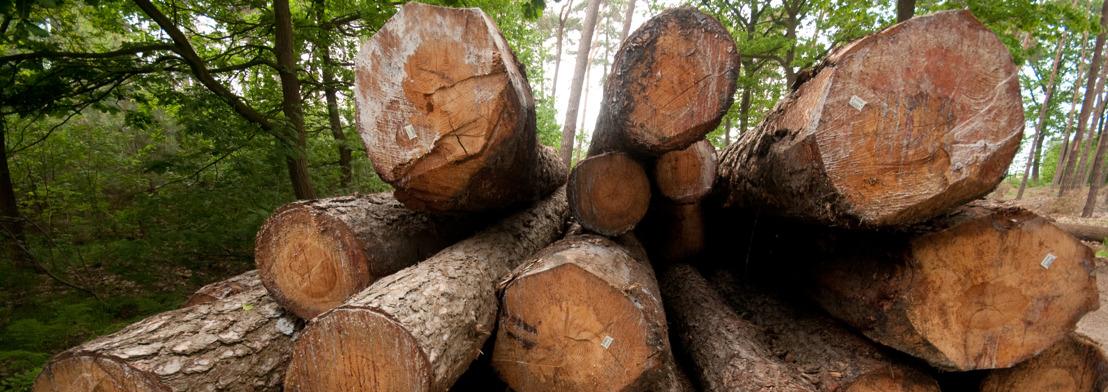 Bomen uit Vlaamse bossen lossen tekort van Vlaamse houtverwerkers op