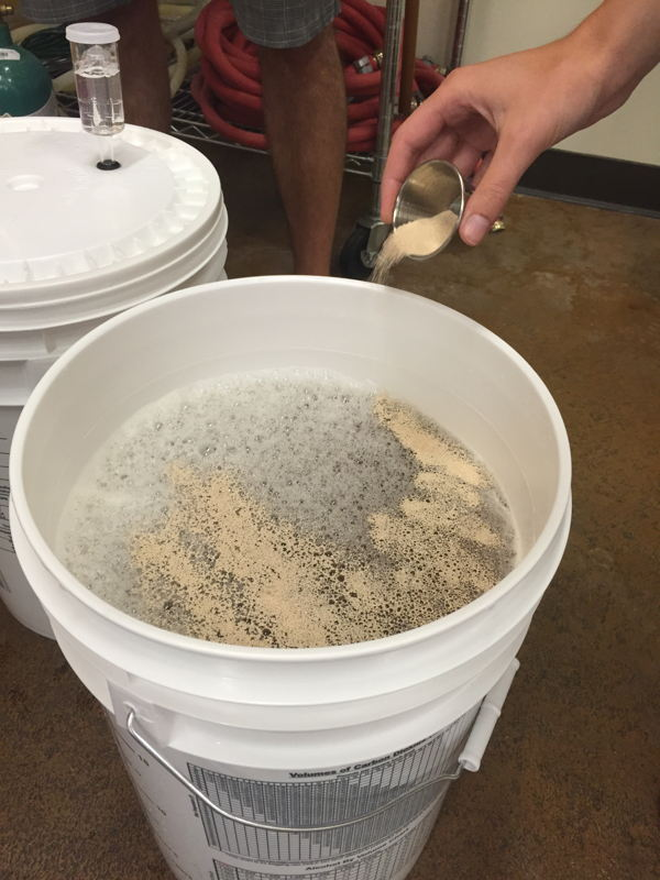 Adding yeast to the wort during the brewing process