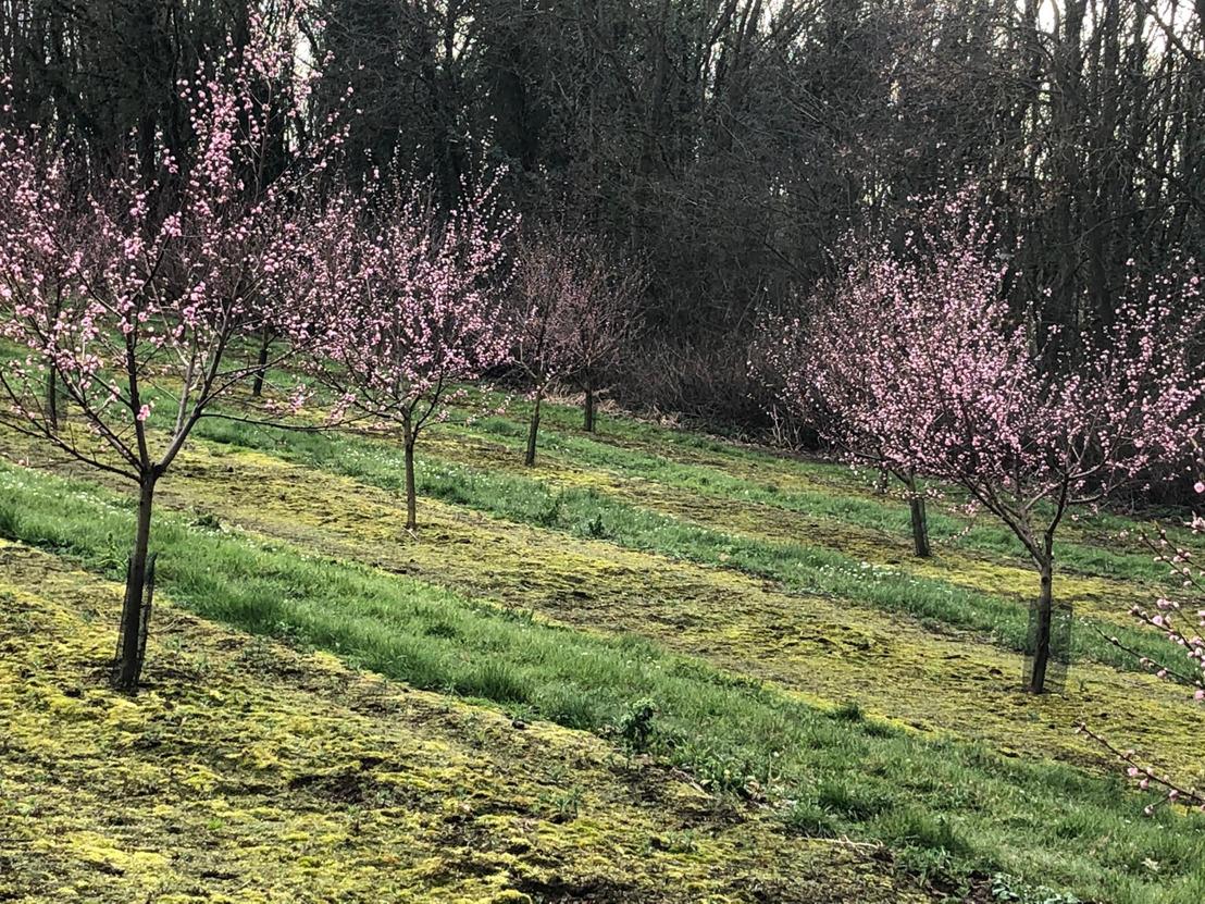 Vlaams-Brabanders gaan 73 hectare bloemen voor bijen zaaien