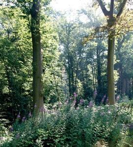 Persagenda van de provincie Vlaams-Brabant