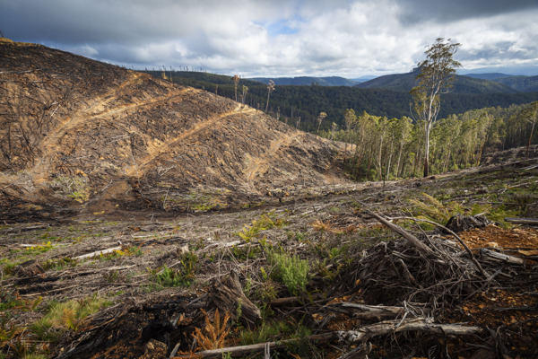 Preview: Victoria's threatened species lose out to logging