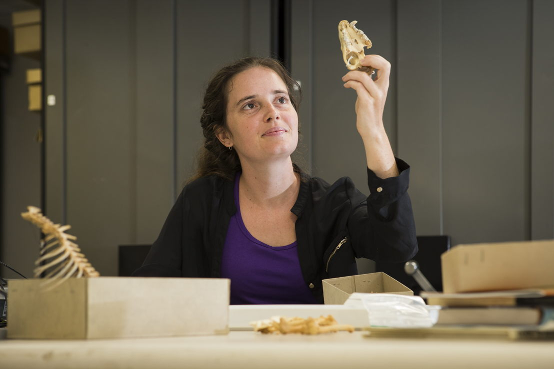 ANU PhD scholar Shimona Kealy with Tasmanian Devil bones. Image credit: Stuart Hay, ANU