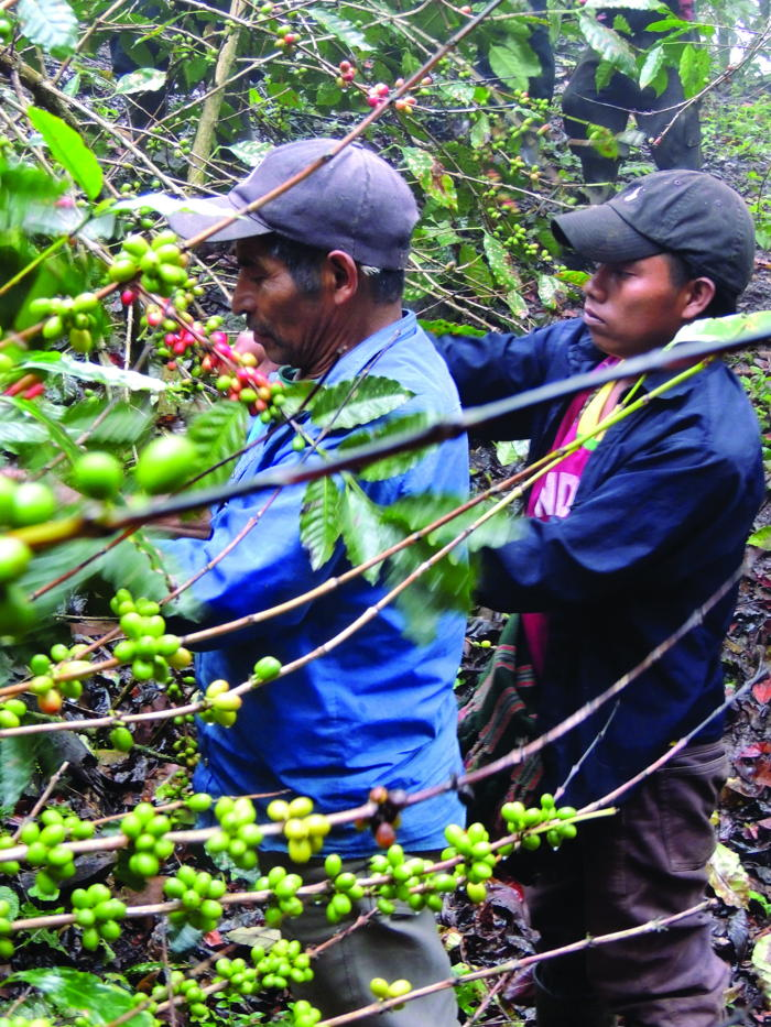 Preview: Two New England Co-ops Fund Lifeline to Coffee Growers