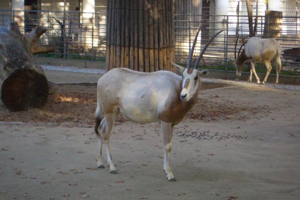 Antwerp Zoo Animals