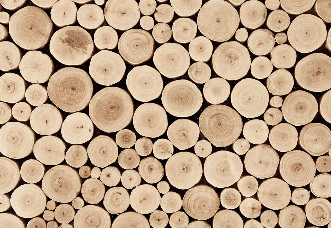 Chopped Beech Logs Wall Mural