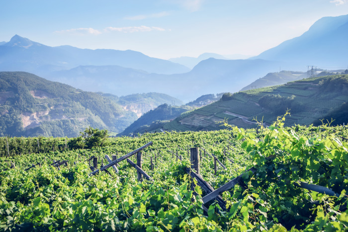 Wine Enthusiast nomina il Trentino Wine Region of the Year 2020