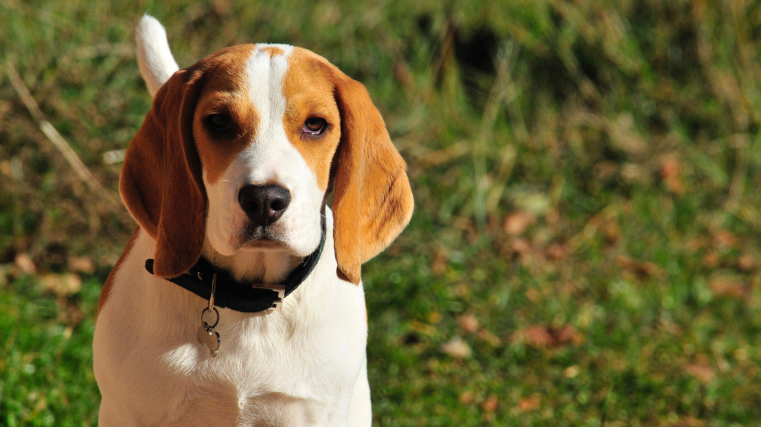 """GAIA on the Brussels Government's decision to reduce animal experiments: """"It's a good start and we've achieved one of our main goals as well, however a lot of work remains to be done"""""""