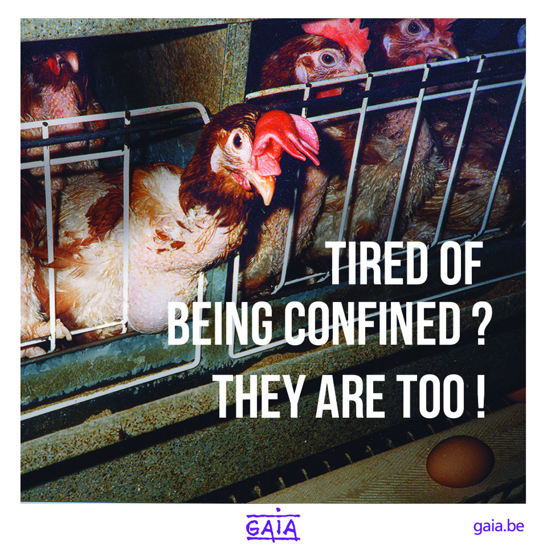 """NEW CAMPAIGN: """"Tired of being confined? They are too!"""""""