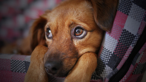 RECHTSZAAK IMPORT OOSTBLOKPUPPY'S: DOGS & CO BLIJFT GESCHRAPT VAN DE LIJST VAN HONDENEXPORTEURS