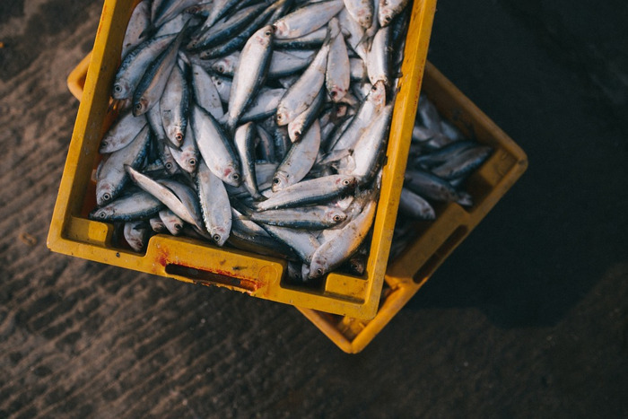 Alle diepvries- en verse vis bij Lidl nu duurzaam gevangen of verantwoord gekweekt