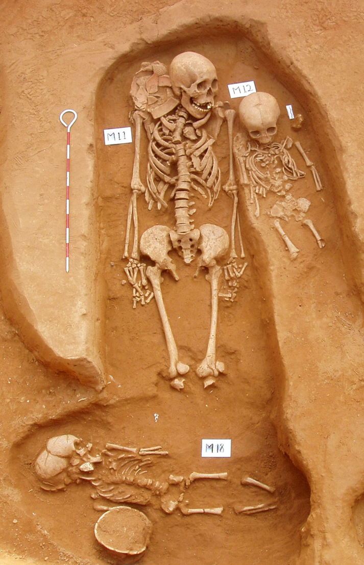 Remains of a 15 year old, a 2 year old and an 18 month old (L-R). Remains from a burial in the Man Bac site in Vietnam. Skeletal remains around 3500 years old. Image: ANU.