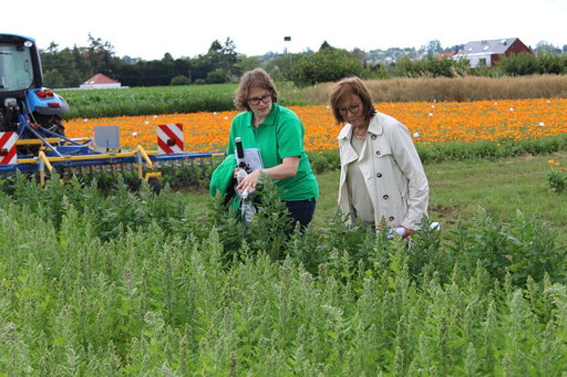 Vlaams-Brabants praktijkonderzoek biedt oplossingen voor landbouwers