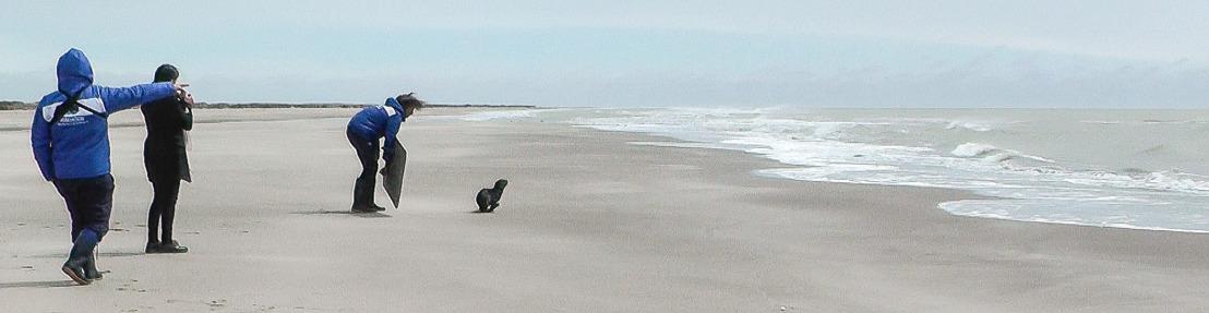 El Lobo Marino hallado en Tigre regresó al mar