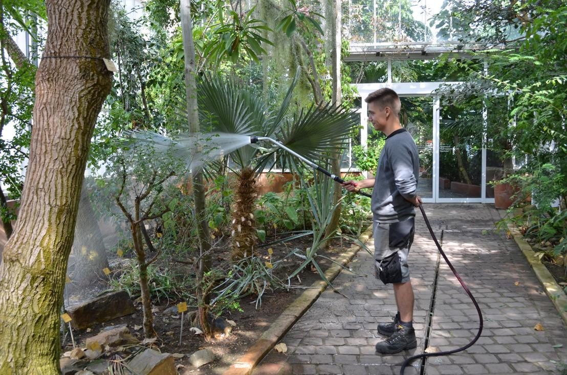 Plantentuin Meise zet maximaal in op gebruik regenwater voor planten